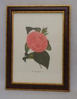 Floral & Plant 2  (Code: FP2M)