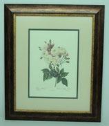 Floral & Plant 9 (Code: FP9P2)