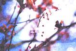 Flowers ( Code : DF16 )