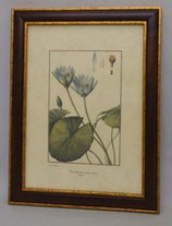 Floral & Plant 20  (Code: FP20M)
