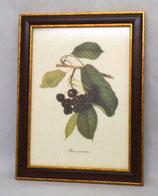 Fruit 7 (Code: F7M)