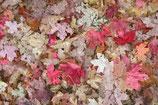 Fall / Autumn ( Code : DFA22 )