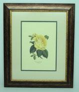 Floral & Plant 1   (Code: FP1P2)