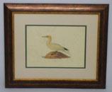 Ζώα & Πουλιά 13 (ΚΩΔ: ΑΒ13P2)