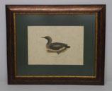 Animal & Bird 10  (Code: AB10P1)