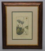Floral & Plant 20  (Code: FP20P2)