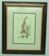 Floral & Plant 19  (Code: FP19P2)