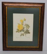 Floral & Plant 14 (Code: FP14P1)