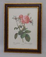 Floral & Plant 11 (Code: FP11M)