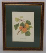 Φρούτα 3  (ΚΩΔ: F3MP1)