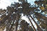Landscape ( Code : DL14 )