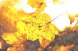 Φθινόπωρο ( Code : DFA16 )