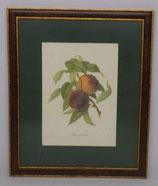Φρούτα 8   (ΚΩΔ: F8MP1)