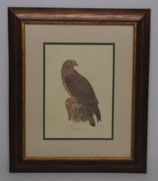 Animal & Bird  6  (Code: AB6P2)