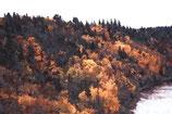 Fall / Autumn ( Code : DFA15 )