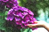 Flowers ( Code : DF12 )