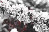 Flowers ( Code : DF19 )