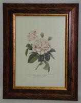 Λουλούδια & Φυτά 6  (ΚΩΔ: FP6)