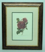 Floral & Plant 4  (Code: FP4P2)