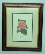 Floral & Plant 2  (Code: FP2P2)