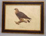 Animal & Bird 9  (Code: AB9M)