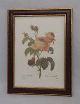Floral & Plant 13  (Code: FP13M)