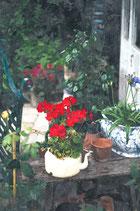 Flowers ( Code : DF22 )