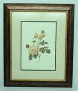 Floral & Plant 15  (Code: FP15P2)