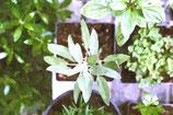 Flowers ( Code : DF5 )