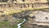 Ποτάμια ( Code : DR13 )