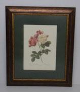 Floral & Plant 10  (Code: FP10P1)