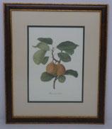 Φρούτα 2  (ΚΩΔ: F2MP2)