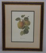 Φρούτα 6  (ΚΩΔ: F6MP2)