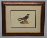 Ζώα & Πουλιά 8  (ΚΩΔ: ΑΒ8P2)