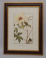 Floral & Plant 22  (Code: FP22M)