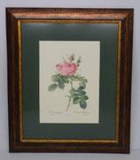 Floral & Plant 12  (Code: FP12P1)