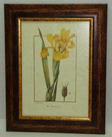 Floral & Plant 21  (Code: FP21)
