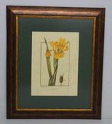 Floral & Plant 21  (Code: FP21P1)