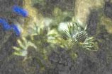 Flowers ( Code : DF4 )