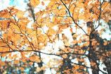 Fall / Autumn ( Code : DFA1 )