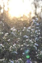 Flowers ( Code : DF21 )