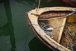 Boats ( Code : DB25 )
