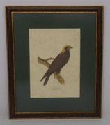 Animal & Bird 5  (Code: AB5MP1)