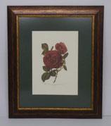 Floral & Plant 4  (Code: FP4P1)
