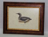 Ζώα & Πουλιά 10  (ΚΩΔ: ΑΒ10)