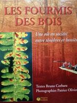 Les Fourmis des Bois