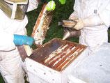 Valorisation des différents produits de la ruche