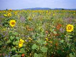 Blühende Landschaft, 5 jährig