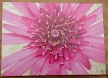 Postkarte: Haferwurzblüte