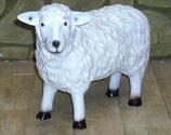 122030 Schaf steht (klein)